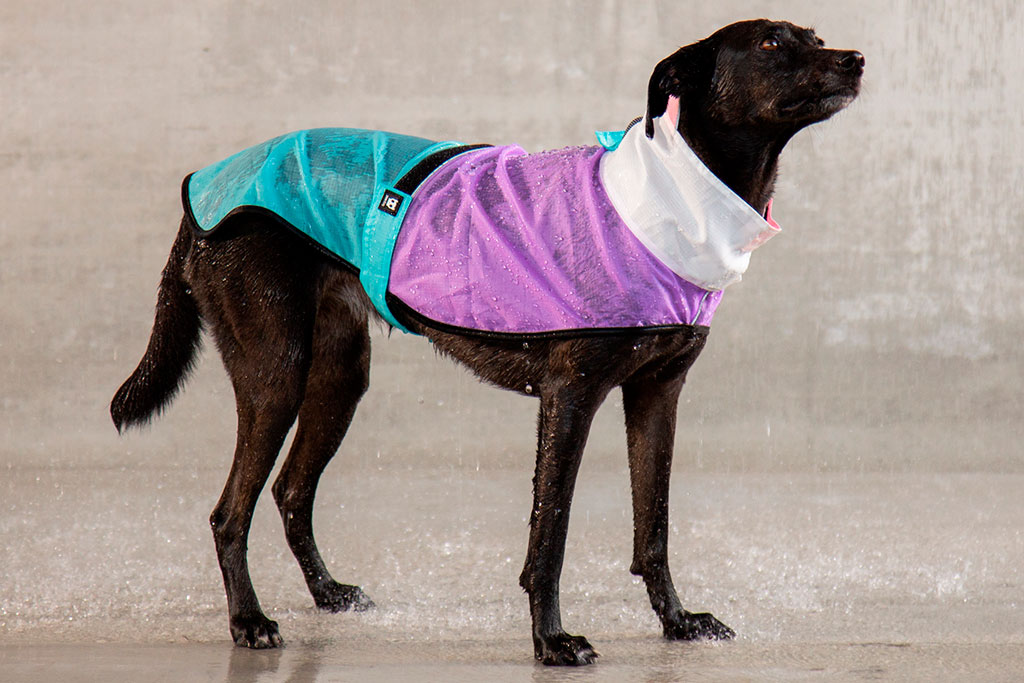 Zee.Dog Raincoat Bel Air on Dog