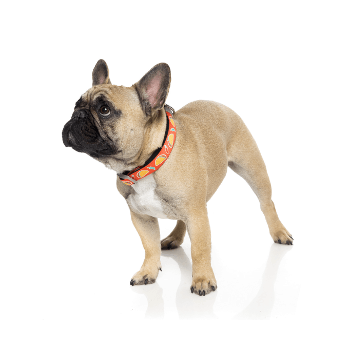 FuzzYard Hey Esse Dog Collar - Collars, Dogs, FuzzYard - Shop Vanillapup - Online Pet Shop