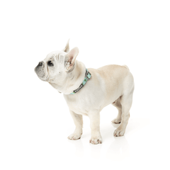 FuzzYard Tucson Dog Collar - Vanillapup Online Pet Shop
