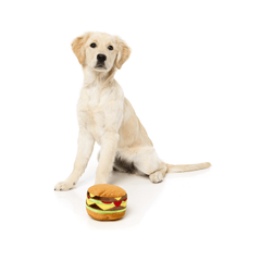 Goldie With FuzzYard Hamburger Dog Toy