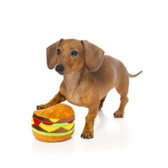 Dachshund With FuzzYard Hamburger Dog Toy