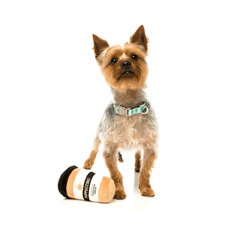 FuzzYard Take Away Coffee Dog Toy - Dogs, FuzzYard, Toys - Shop Vanillapup