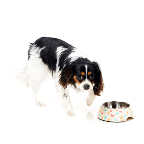 Spaniel With FuzzYard Fab Easy Feeder Bowl