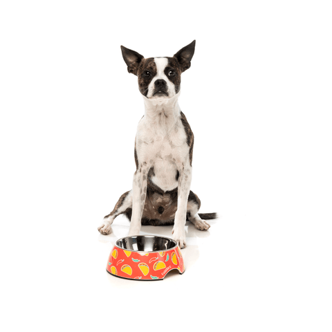 Dog with FuzzYard Hey Esse Easy Feeder Bowl