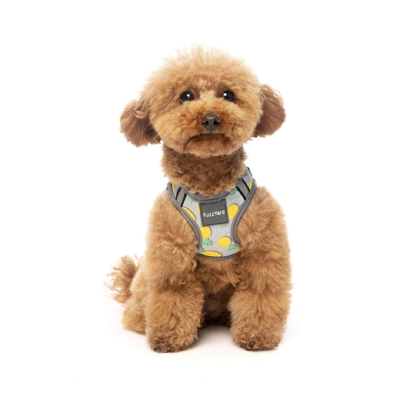 FuzzYard Pina Colada Step-in Harness - Dogs, FuzzYard, Harnesses, New - Shop Vanillapup - Online Pet Shop
