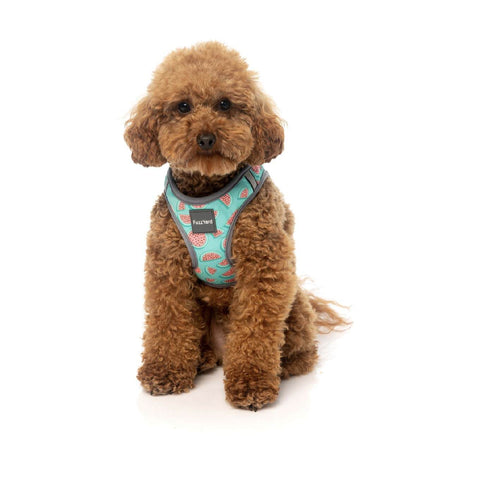 FuzzYard Summer Punch Step-in Harness - Dogs, FuzzYard, Harnesses, New - Shop Vanillapup