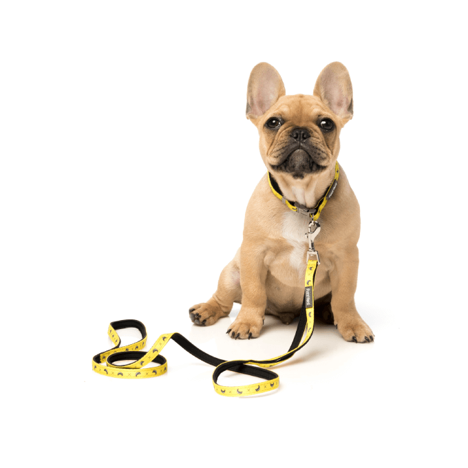 FuzzYard Monkey Mania Dog Lead - Dogs, FuzzYard, Leashes - Shop Vanillapup - Online Pet Shop