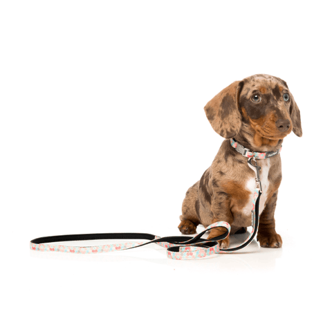 FuzzYard The Hive Dog Lead - Dogs, FuzzYard, Leashes - Shop Vanillapup - Online Pet Shop