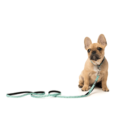 FuzzYard Tucson Dog Collar - Shop Vanillapup Online Pet Shop