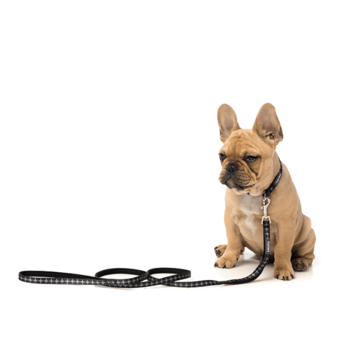 FuzzYard Yeezy Dog Lead - Dogs, FuzzYard, Leashes - Shop Vanillapup - Online Pet Shop