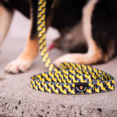 Gentle Pup Leash | Zippy Zag