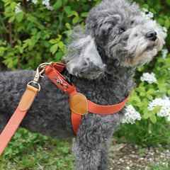 HOWLPOT Adventure Series Step-in Harness - Mars - Dogs, Harnesses, Howlpot, New, New Dog, Walking - Shop Vanillapup - Online Pet Shop
