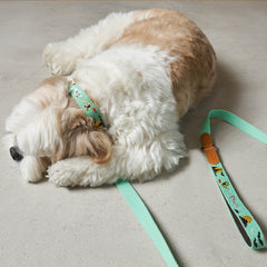 HOWLPOT Adventure Series Leash - Ghost - Vanillapup Online Pet Store