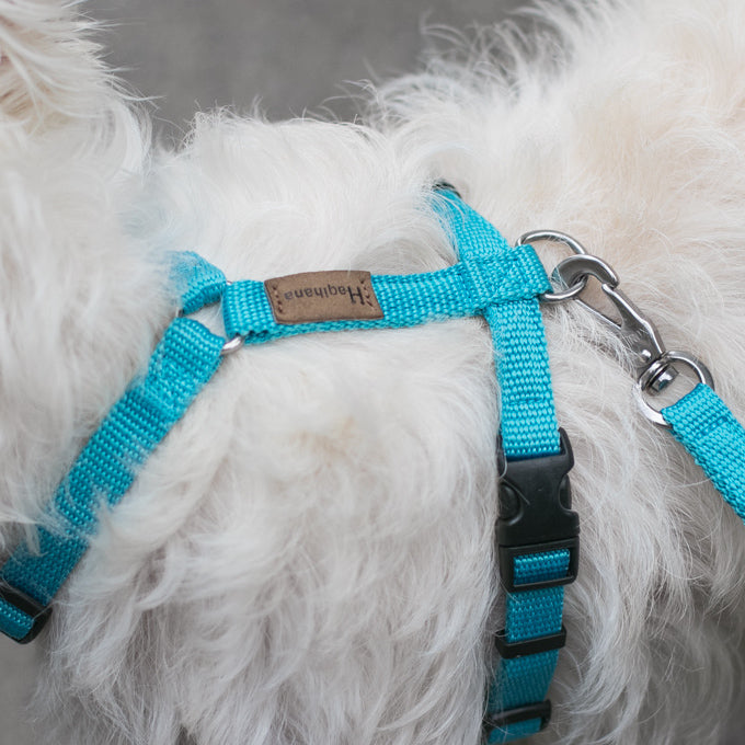 Haqihana Arctic Harness and Leash on Latte