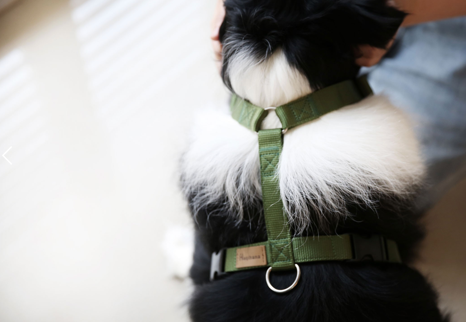 Haqihana Green Harness - Cats, Dogs, Haqihana, Harnesses, Puppy - Shop Vanillapup - Online Pet Shop