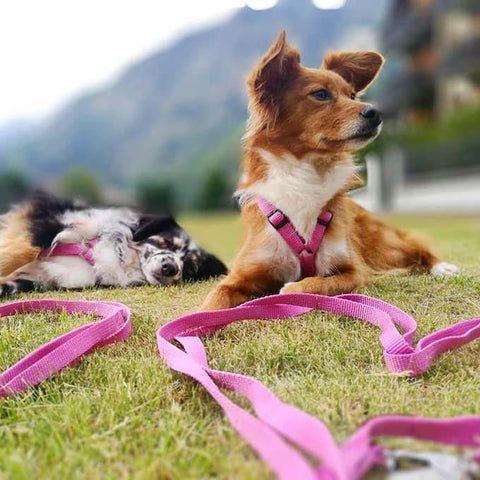 Haqihana Pink Leash on Dogs