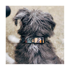 Herzog Dugan Weatherproof Dog Collar | Limited Edition - Vanillapup Online Pet Shop