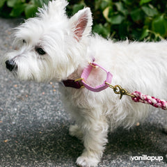 Dog + Bone Martingale Collar | Purple & Orchid - Vanillapup Online Pet Store