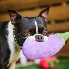 PLAY Farm Fresh Eggplant Plush Toy - Vanillapup Online Pet Shop