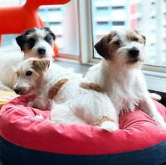 Wooof by Betters Super Comfy Fleepy Bed - Beds, Cats, Dogs, Wooof by Betters - Shop Vanillapup - Online Pet Shop