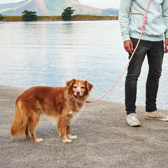 [20% Off] Zee.Dog Hands Free Rope Leash | Pink Tech