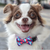 Zee.Dog Adria Bow Tie - Vanillapup Online Pet Shop