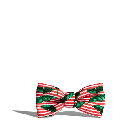Zee.Dog Bali Bow Tie - Apparel, Dogs, Zee.Dog - Shop Vanillapup