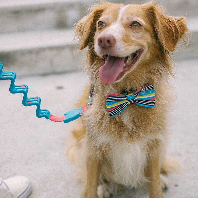 Zee.Dog Brooklyn Bow Tie and Leash