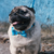 Zee.Dog Buzz Bow Tie - Shop Vanillapup Online Pet Shop