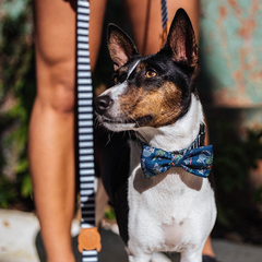 Zee.Dog Mango Bow Tie - Apparel, Dogs, Zee.Dog - Shop Vanillapup - Online Pet Shop