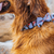 Zee.Dog Wasabi Bow Tie - Vanillapup Online Pet Shop