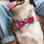 Zee.Dog Uni Bow Tie - Shop Vanillapup Online Pet Shop