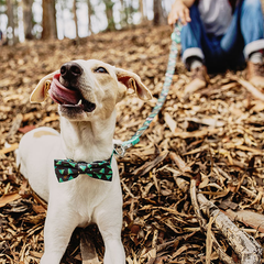 Zee.Dog Woods Bow Tie - Shop Vanillapup Online Pet Shop