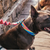 Zee.Dog Bowie Dog Collar - Shop Vanillapup Online Pet Shop