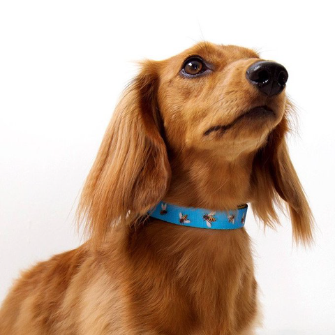 Zee.Dog Buzz Dog Collar - Collars, Dogs, Zee.Dog - Shop Vanillapup