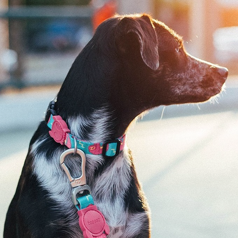 Zee.Dog Lazy Dog Collar - Collars, Dogs, Zee.Dog - Shop Vanillapup