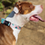 Zee.Dog Polka Dog Collar - Shop Vanillapup Online Pet Shop