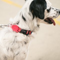 Zee.Dog Uni Dog Collar - Shop Vanillapup Online Pet Shop