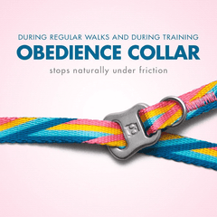 Zee.Dog Bowie Obedience Collar
