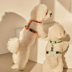andblank® H Harness | Mint - Vanillapup Online Pet Store