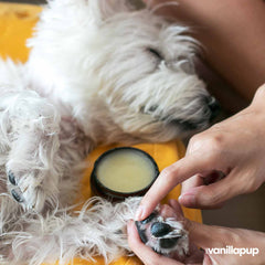 Essential Dog Organic Nose and Paw Balm (50g) - Vanillapup Online Pet Store