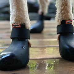 Wagwear WagWellies™ Dog Boots | Black