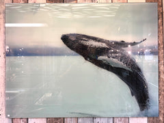 Glass Print Whale Picture