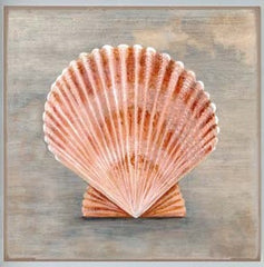 Shell Canvas