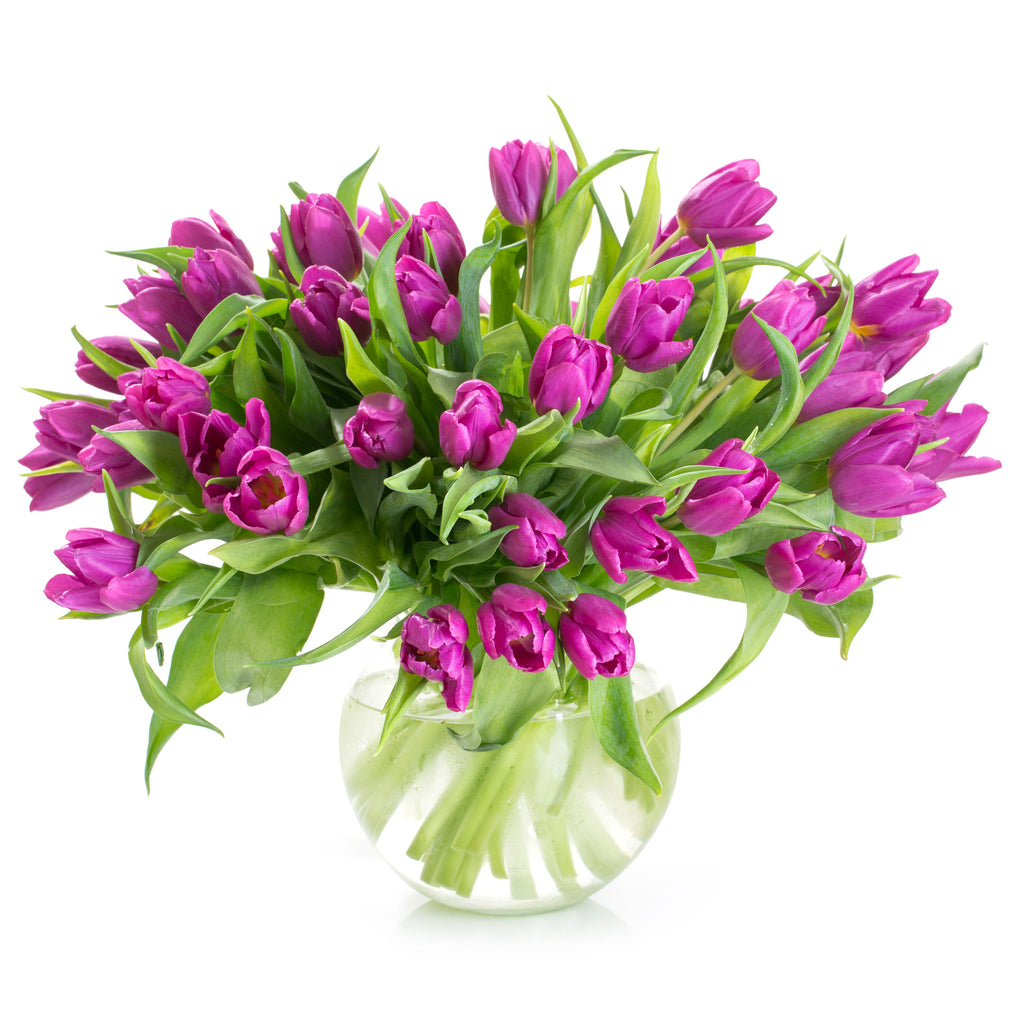 A Purple tulips bouquet