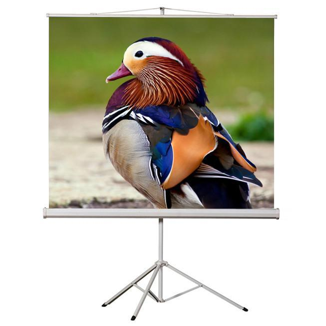 "71"" 1:1 Tripod compact projection screen 50X50"" W - 13-0108 - Mounts For Less"