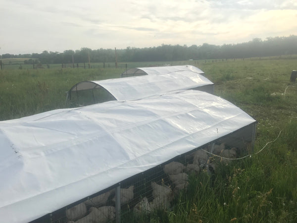 Portable Chicken Tractor - 8' x 16' (Coming Soon)
