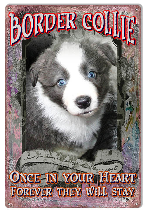 Border Collie In Your Heart Reproduction Animal Metal  Sign 12″x18″