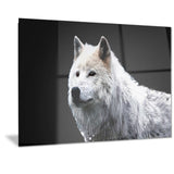 Wonder of the Wolf- Animal Canvas Print PT2329