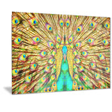 Flashy Feathers - Peacock Canvas Art PT2414